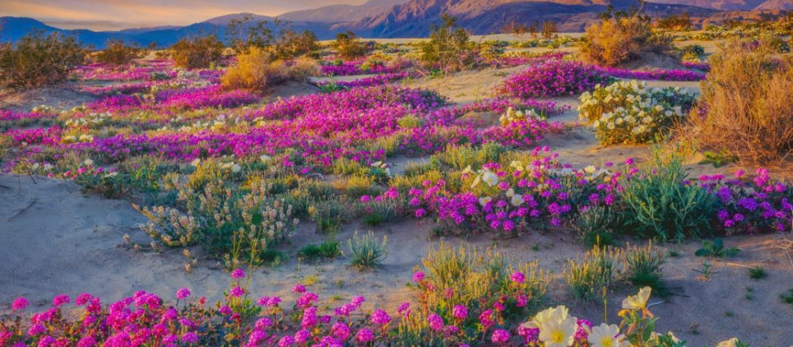 california anza-borrego-foundation