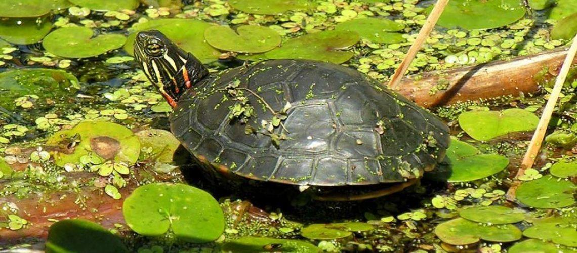 turtle green